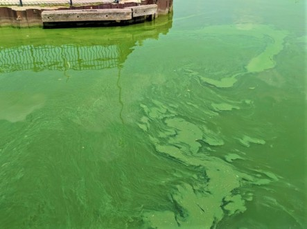Green algae bloom near the city of Green Bay