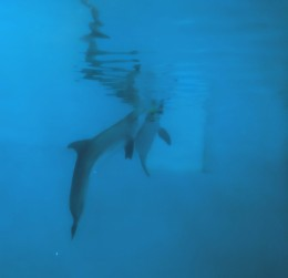 Winter from Dolphin Tale