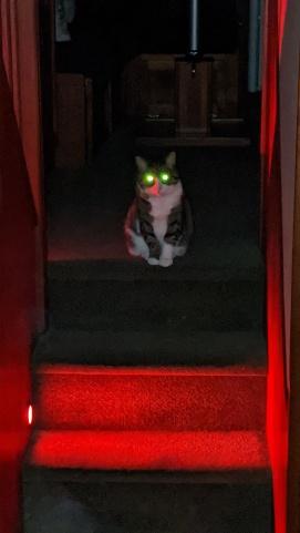 Eeeeevil Cat, Scully