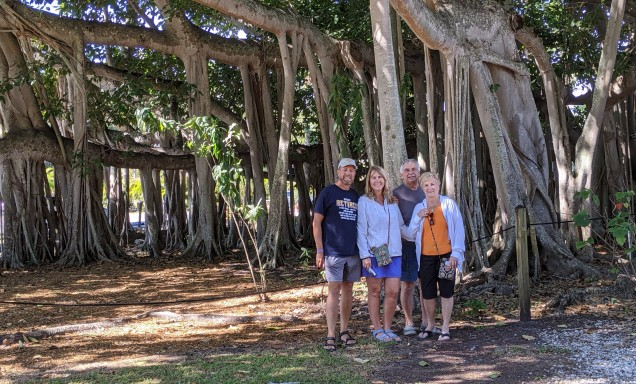 Largest banyan tree in the continental US. 3/4 of an acre